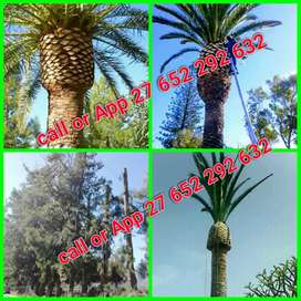 Landscaping and tree felling services
