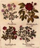 ZIELNIK 1713 r. reprodukcje XVIII w. grafiki do wystroju wnęrza