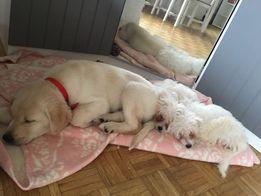 Opieka nad psem/kotem/Domowy hotel