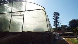 Greenhouse tunnels for Aquaponics for sale