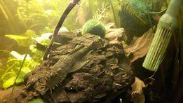 Ligitowe bryły akwariowe