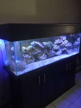 Salt water tank and fish