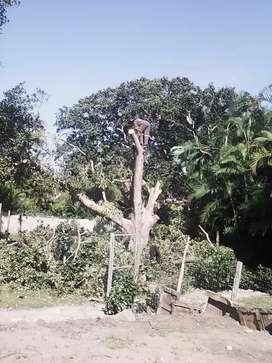Tree felling and garden service