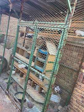 Dove/birds  cage and houses with 26 various doves