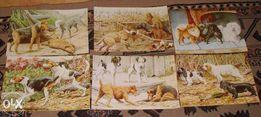 ZWIERZĘTA - Psy, Koty, Konie reprint XIX w. grafik - 30x20 cm