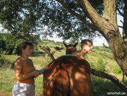 Татьянин хутор. Иппотерапия. Занятия на лошадях.