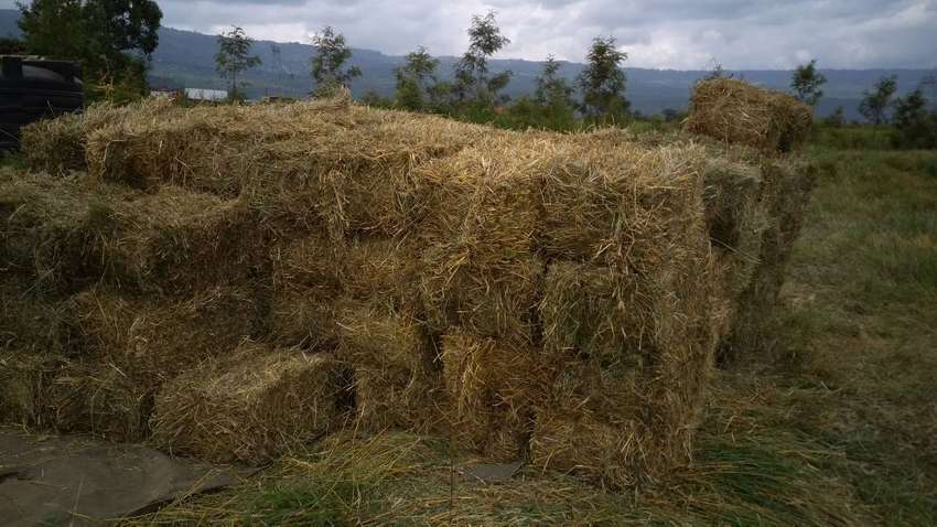 Hay for sale 0