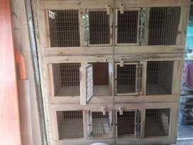 Canary Breeder Box Special 6 in 1