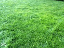 Ziemia przesianą trawnik ziemia przesiewana ziemia ogrodowa