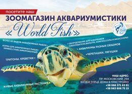 аквариумные рыбки в специализированном зоомагазине