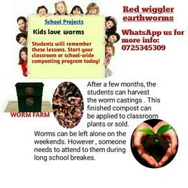 School Projects , worm composting