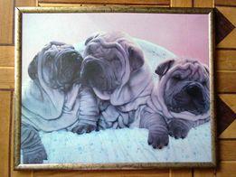 """Картина-фото (фоторамка, фоторама) собаки-щенки """"Шарпей (Шарпеи)"""""""
