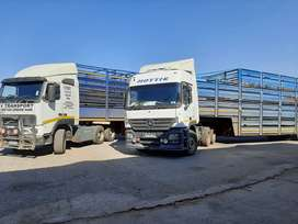 Cattle  transport