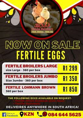 Fertile Eggs For Sale