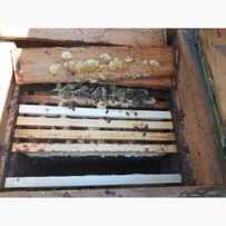 Бджолопакети 125шт.