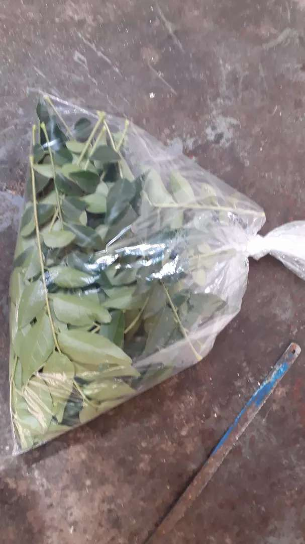 curry leaves for sale 0