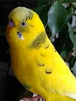 Передержка птиц ( попугаев, канареек и пр.)