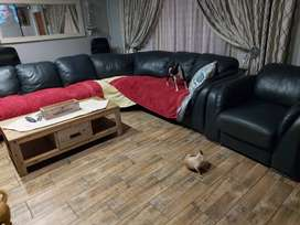 Full hide , genuine leather lounge suite for sale
