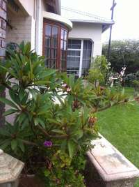 Image of Lawn Mowing, Planting, Landscaping and Gardening