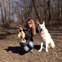 передержка для собак не больших пород