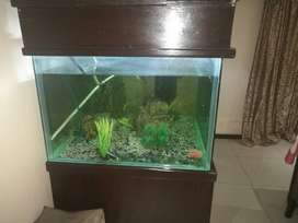 Urgent sale. Large fish for sale 1200x1000x1000 with cabinet