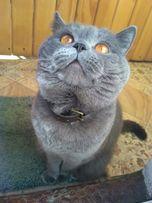 породистый кот приглашает невесту