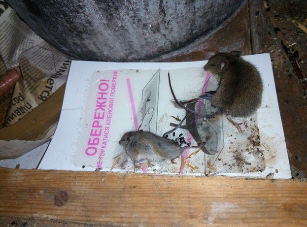 Уничтожение тараканов,постельных клопов,клещей,кротов,крыс,мышей т.д. Киев - изображение 5