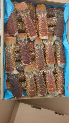 Fresh Crayfish tails for sale