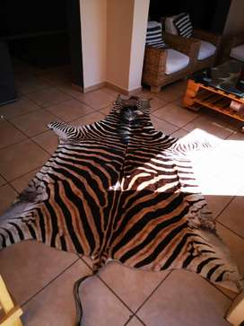 Zebra Carpet - Genuine leather hide.