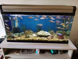 Fish tank for sale with almost new canister pump. Keeping some of the