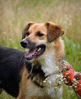 Красавица собака Арина в добрые руки!