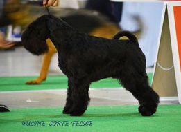 Стрижка,тримминг собак