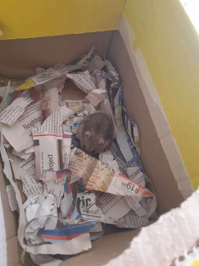 Hamster Make offer Urgent need for a home 0
