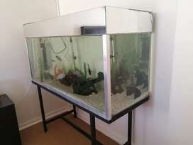Huge 350L Fish tank and accessories