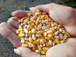 Зерно овёс, ячмень, пшеница, кукуруза, сено, дрожжи кормовые . Песочин