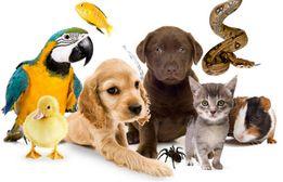 Присмотр за животными