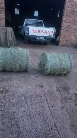 Teef square bales fresh and ready