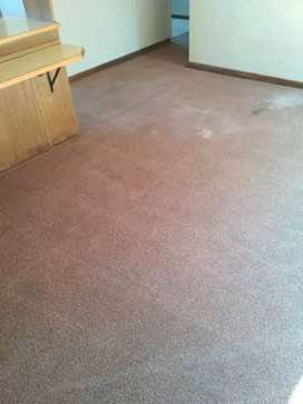 Couches and Carpet cleaning