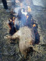 Необрезная свинина 160р
