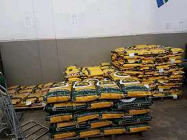 Maize seeds available