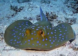 Морские Скаты Мурены Акулы Аквариумные Рыбы