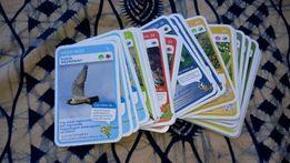 Karty Super Zwierzaki, Biedronka