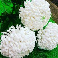 Цветы ручной работы,хризантема Кремист белый.