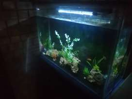 Custom 3ft fish tank