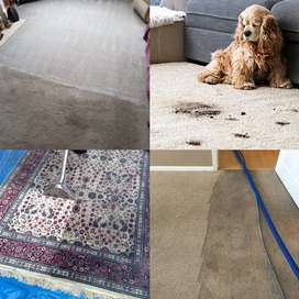 Carpets & rugs DEEP cleaned