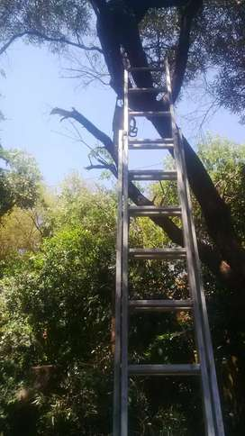 Tree felling trimming  rubble removal