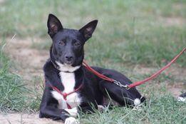 Потерялась черно-белая собака сука , Макаровский район