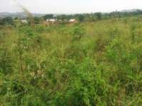 A u tired of renting and u want to cheap plot with landtittle on table 0