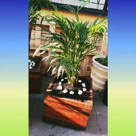 D&S Plants indoor and outdoor plants with wooden boxes