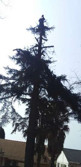 CT TREE FELLING AND RUBBLE REMOVAL